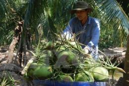 """Công bố chỉ dẫn địa lý """"Bến Tre"""" cho dừa tươi uống nước xiêm xanh và bưởi da xanh"""