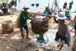Ngư dân Thanh Hóa kiếm tiền triệu mỗi ngày nhờ trúng vụ cá trích