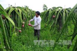 Ninh Bình nâng cao hiệu quả phát triển kinh tế tập thể