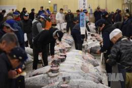 EU có thể sẽ dỡ bỏ lệnh cấm nhập khẩu thủy hải sản từ Nhật Bản