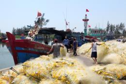"""Khắc phục """"thẻ vàng"""" IUU: Đà Nẵng tăng cường truy xuất nguồn gốc hải sản"""