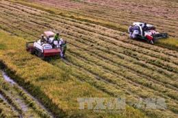 Dự án VnSAT cần mang lại lợi ích thiết thực cho nông dân