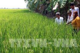 Phê duyệt Đề án phát triển 15.000 Hợp tác xã, liên hiệp Hợp tác xã nông nghiệp