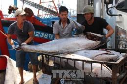 Thừa Thiên - Huế chi hơn 35,8 tỷ đồng hỗ trợ tàu cá đánh bắt xa bờ