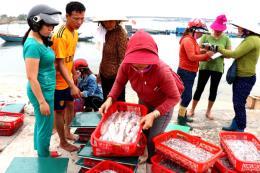 Biển Quảng Trị hồi phục sau 2 năm sự cố môi trường biển