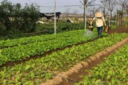 Nông sản an toàn: Không để