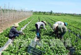 Biến đổi khí hậu: Thế giới đứng trước nguy cơ khan hiếm rau xanh