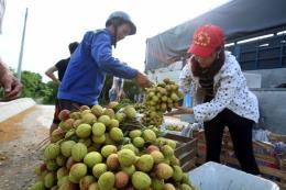Đẩy mạnh tiêu thụ nông sản: