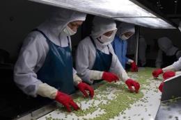 Thêm nhiều doanh nghiệp nông nghiệp được thành lập mới