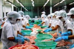 """Xuất khẩu cá tra sang Mỹ: Doanh nghiệp vẫn """"đối mặt"""" với trở ngại"""