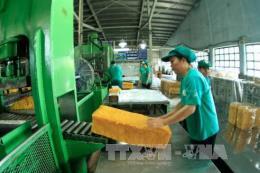 Giá cao su xuất khẩu giảm cùng chiều với giá cao su thế giới