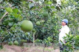 Đầu tư 35 tỷ đồng phát triển các sản phẩm nông nghiệp có lợi thế