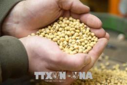 Giá nông sản Mỹ tuần qua đi lên