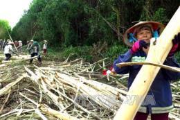 Sản xuất viên nén năng lượng từ gỗ rừng trồng bị thải loại