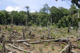 Thực hự thông tin đất rừng cấp cho doanh nghiệp khai thác mỏ đá tại Kon Tum