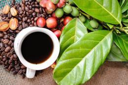 Dự báo giá cà phê tuần từ 13-17/8