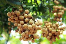 Nông sản, thực phẩm Việt vượt rào để xuất khẩu châu Âu