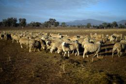 Australia chi thêm hơn 1,3 tỷ USD giúp nông dân bị ảnh hưởng hạn hán