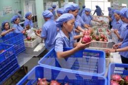 Giá trị xuất khẩu rau quả tăng 15,5% so với cùng kỳ