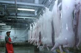 Đảm bảo cung cầu thịt lợn trước dịch tả lợn châu Phi