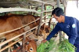 Ninh Binh: Khoản vay nhỏ, lợi ích to