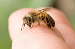 Hôn mê nhiều giờ sau khi bị ong đốt