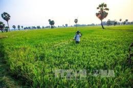 Phát triển nông nghiệp công nghệ cao tại An Giang