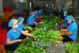 Bà Rịa-Vũng Tàu: Hơn 40% hợp tác xã nông nghiệp hoạt động khá, tốt