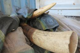 Phát hiện số lượng ngà voi và vảy tê tê lớn nhất trong năm