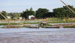 Nông dân Kiên Giang thu nhập tăng nhờ lũ