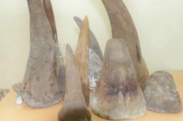 Cận cảnh lô hàng nghi là sừng tê giác vận chuyển từ Nam Phi về Việt Nam