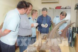 Phát hiện kiện hàng nghi sừng tê giác gửi từ Nam Phi về Việt Nam