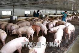 Cung cấp thông tin về giải pháp ngăn chặn dịch tả lợn châu Phi