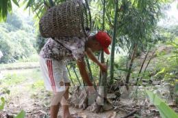 Phát triển con người và xóa đói giảm nghèo: Còn nhiều thách thức đối với Việt Nam