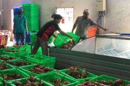 Tạo chuỗi liên kết để nông nghiệp phát triển bền vững