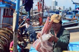 Quảng Ngãi tăng cường kiểm soát việc tuân thủ pháp luật về khai thác thủy sản