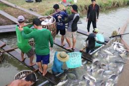 Quy định mới về đối tượng thủy sản nuôi chủ lực