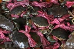 Giá cua biển tăng 20.000 – 30.000 đồng/kg
