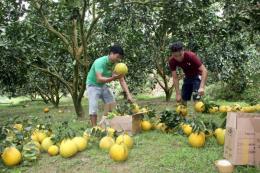 Sản xuất quy mô lớn nhờ chính sách hỗ trợ cho nông nghiệp