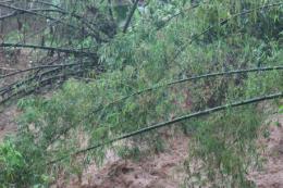 Mưa lớn gây sạt lở núi, 3 người chết và mất tích