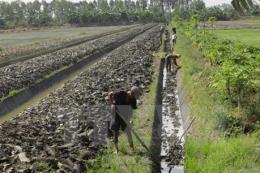 Biến tư duy kinh tế thành hiện thực cho nền nông nghiệp của Đồng bằng