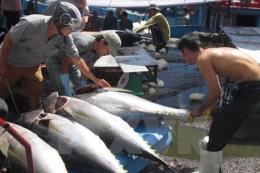 Nghề đánh bắt cá trước mối nguy biến đổi khí hậu (Phần 1)