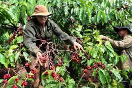 Lâm Đồng xây dựng 200 chuỗi liên kết sản xuất, tiêu thụ nông sản