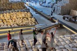 Giá gạo xuất khẩu của Việt Nam tuần này đi xuống
