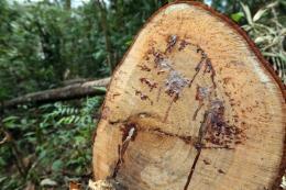 """Khởi tố công an viên nhận tiền để """"cho phép"""" phá rừng"""