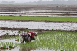 Trên 48% diện tích đã có nước để gieo cấy vụ Đông Xuân