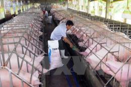 Hiệp định CPTPP: Áp lực lớn với ngành chăn nuôi