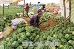 Nông dân kỳ vọng các loại nông sản đặc sản sẽ được giá
