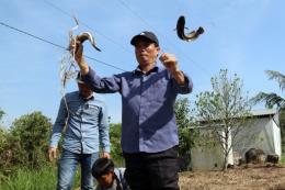 """Du lịch sinh thái rừng tràm U Minh Thượng bằng vỏ lãi """"vượt chướng ngại vật"""""""
