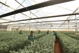 PAN có triển vọng kinh doanh mảng giống cây trồng